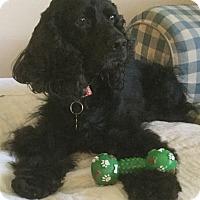 Adopt A Pet :: Tommy Bahama - Sugarland, TX