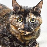 Adopt A Pet :: Gigi - Dublin, CA