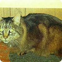 Adopt A Pet :: SIR TALKSALOT - Clay, NY
