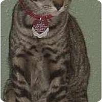 Adopt A Pet :: Radar - Franklin, NC