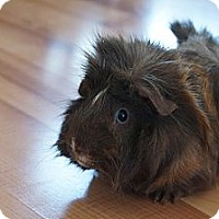 Adopt A Pet :: Charlie - Brooklyn Park, MN