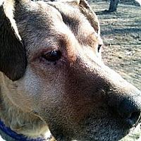 Adopt A Pet :: Koho - Wasilla, AK
