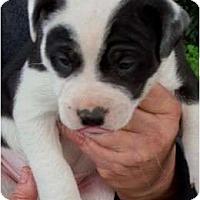 Adopt A Pet :: Prancer - Glastonbury, CT