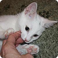 Adopt A Pet :: Avalon (LE) - Little Falls, NJ