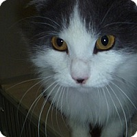 Adopt A Pet :: Sasha - Hamburg, NY