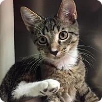 Adopt A Pet :: Dill - Topeka, KS