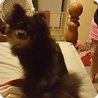 Adopt A Pet :: Chloe - Lorain, OH