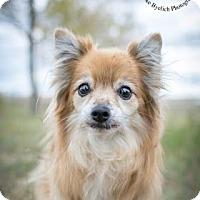 Adopt A Pet :: China - Cheyenne, WY