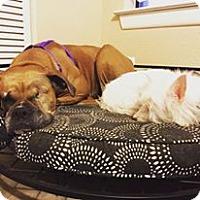 Adopt A Pet :: Lai Lai - Austin, TX