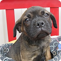 Adopt A Pet :: Paris - Groton, MA