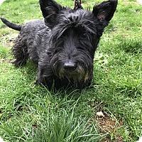 Adopt A Pet :: Napoleon - Tumwater, WA