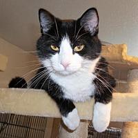 Adopt A Pet :: Windy - Lacon, IL
