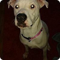 Adopt A Pet :: Molly - Troy, MI