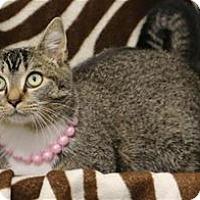 Adopt A Pet :: Tink - Raleigh, NC