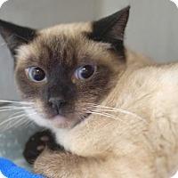 Adopt A Pet :: Evie - Alameda, CA