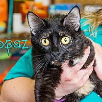 Adopt A Pet :: Topaz - Somerset, PA