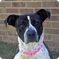 Adopt A Pet :: Bo Peep - Germantown, TN