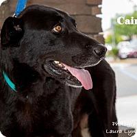 Adopt A Pet :: Caine - Clovis, CA