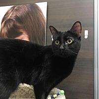 Adopt A Pet :: Georgi - Chandler, AZ