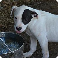 Adopt A Pet :: Tundra - Sunnyvale, CA