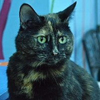 Adopt A Pet :: Charm - Evansville, IN