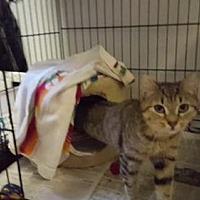 Adopt A Pet :: Quinn - Stroudsburg, PA