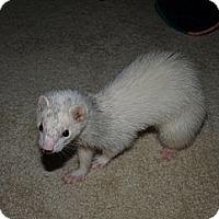 Adopt A Pet :: Izzy - Acworth, GA