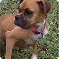 Adopt A Pet :: Marcy - Thomasville, GA