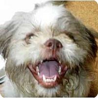 Adopt A Pet :: Lucas-NC - Chapel Hill, NC