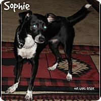 Adopt A Pet :: Sophie - Cincinnati, OH