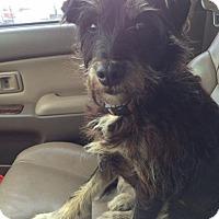 Adopt A Pet :: Kizzie - Vidor, TX