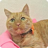Adopt A Pet :: Katie - Foothill Ranch, CA