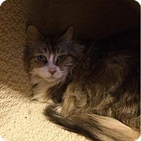 Adopt A Pet :: Penny - Edmonton, AB
