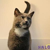 Adopt A Pet :: Greyson - Sebastian, FL