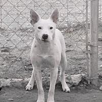 Adopt A Pet :: Barba - Clifton, TX