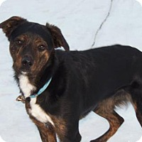 Adopt A Pet :: Chance - Owatonna, MN