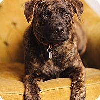 Adopt A Pet :: Barney - Portland, OR