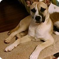 Adopt A Pet :: Hardee - Gallatin, TN