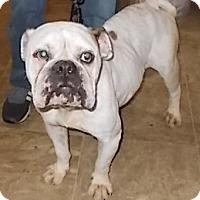 Adopt A Pet :: Penny - Lemoore, CA