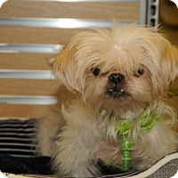 Adopt A Pet :: Goldfish - N. Babylon, NY