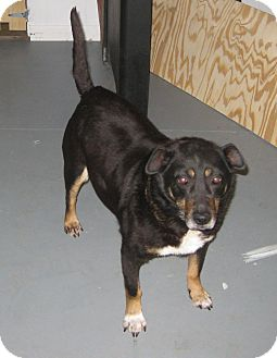 Terrier (Unknown Type, Medium) Mix Dog for adoption in Prole, Iowa - Tomi