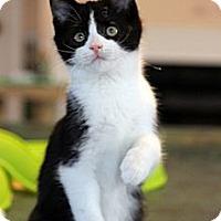 Adopt A Pet :: Murray - Arlington, VA