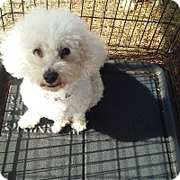 Adopt A Pet :: Nina - Miami, FL
