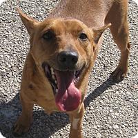 Adopt A Pet :: Max - Seguin, TX