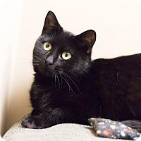 Adopt A Pet :: Frieda - Chicago, IL