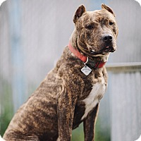 Adopt A Pet :: Maggie - Portland, OR
