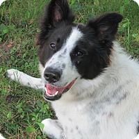 Adopt A Pet :: Josie - Midwest (WI, IL, MN), WI
