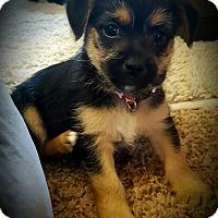 Adopt A Pet :: Cole - Gig Harbor, WA