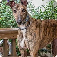 Adopt A Pet :: Rian - Walnut Creek, CA