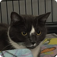 Adopt A Pet :: Kimberly - Lafayette, NJ